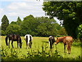 SU7347 : Meadow, Long Sutton by Colin Smith