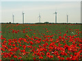 TA1357 : Power and Poppies by Andy Beecroft