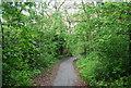 TQ3170 : Capital Ring, Biggin Wood by N Chadwick