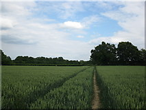 SU7953 : Path through the wheat by don cload