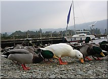 SD3097 : Coniston Pier with Ducks! by Anthony Parkes