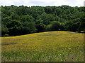 SN2042 : Buttercup meadow by ceridwen