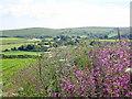 SW4230 : Hedgerow near Trannack Farm by Rod Allday