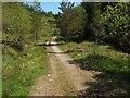 NS2885 : Track through Highlandman's Wood by Lairich Rig