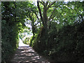 SX7869 : Lane down to Orlycombe Cross by Robin Stott