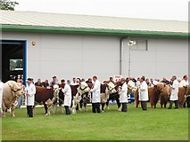 NT1473 : Cattle judging, Royal Highland Show by Richard Webb