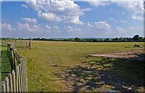 SJ5608 : Wroxeter Roman City (03) - part of the unexcavated city by P L Chadwick