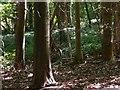 SU8417 : Squirrel on Linch Down by Shazz