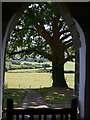 SU8518 : Churchyard tree by Shazz