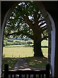 SU8518 : Churchyard tree by Shazz