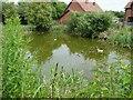 TM4294 : Village Pond at Toft Monks, Norfolk by Adrian S Pye
