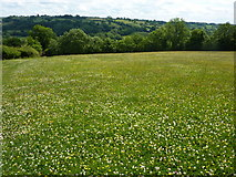 SK1750 : Meadow above Fenny Bentley by Peter Barr