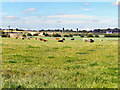 SD8408 : Farmland at Birch by David Dixon