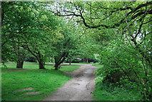 TQ3870 : Green Chain Walk, Beckenham Place Park by N Chadwick
