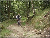 SD9726 : Pennine Bridleway, Callis Wood by michael ely