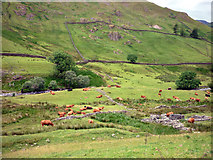 NY4112 : Cattle, Pasture Beck by Karl and Ali