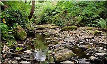 J4681 : Almost dry stream, Crawfordsburn Country Park by Albert Bridge