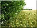SE9466 : Edge of Croome Dale Plantation by JThomas