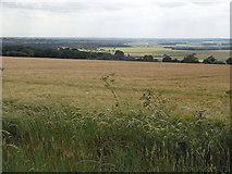 TA0114 : Ripening Barley near Worlaby by David Wright