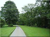 NZ3412 : Driveway from Dinsdale Spa by Chris Heaton