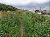 TA0623 : Public Footpath at Barrow Haven by David Wright