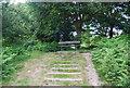 TQ5739 : Bench on Tunbridge Wells Common by N Chadwick