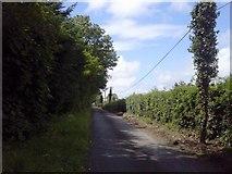 O1452 : Country Road, Co Dublin by C O'Flanagan