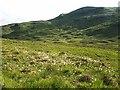 NN4739 : Bog cotton near the source of the Allt Rioran by wrobison