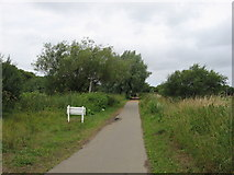 SZ5885 : NCN 23, near Sandown, IoW by Gareth James