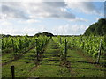 TR2443 : Vineyard off Chalksole Green Lane by Oast House Archive