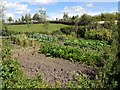 NZ3365 : Anglo-Saxon Vegetable Garden, Bede's World by Andrew Curtis