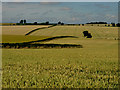 SE9646 : Wheat Fields West of Holme-on-the-Wolds by Andy Beecroft