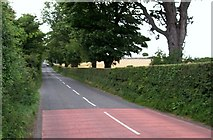 J3532 : View north along the narrow Bryansford Road (B180) by Eric Jones