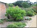 TF8742 : Internal dividing wall of walled garden at Holkham Hall by Sarah Charlesworth