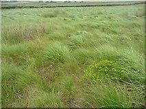 SD9920 : Wet moorland, Soyland by Humphrey Bolton
