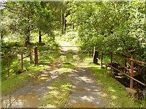 SH8112 : Gate across forest track by liz dawson