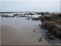 TA0487 : Exposed kelp in South Bay by John S Turner