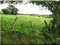 C1311 : Tullygay Townland by Kenneth  Allen