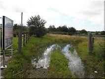 C1309 : Marshy ground, Ardahee by Kenneth  Allen