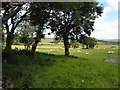 C0511 : Fahykeen Townland by Kenneth  Allen