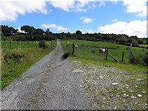 C1010 : Lane, Doon Glebe by Kenneth  Allen