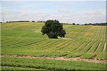 SK5853 : Blidworth farmland by Richard Croft