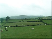 J2533 : Sheep pastures south of the Castlewellan Road and west of The Square by Eric Jones