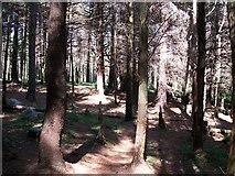 J3629 : The descent through Donard Forest by Eric Jones