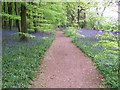 SU9297 : Path through wood at Mop End by michael