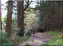 J3629 : Warning to users of the riverside path below Craignagore Bridge by Eric Jones
