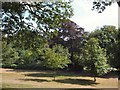TQ3204 : Trees in Queens Park by Paul Gillett