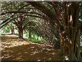 TQ4569 : Park Wood, Chislehurst (1) by Stephen Richards