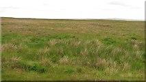 ND1945 : Moorland, Ballachy by Richard Webb