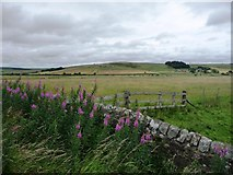 NY8693 : Pasture in Redesdale by Christine Johnstone